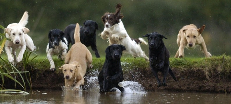 Part Trained Dogs