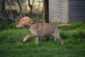 Home - Countryways Gundogs - International Gun Dog Trainer